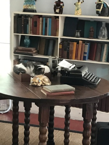 Kitty curled up on Hemingway's writing desk in his studio